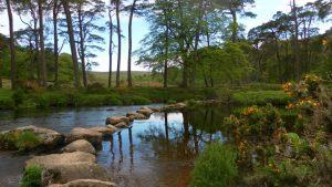 Forest_Inn5